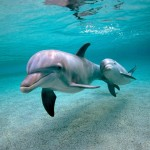 Parto na água com golfinho