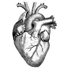 real-coração-humano-desenho-branco-e-preto