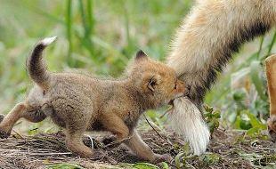 respeite-os-animais